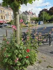 roses trémières,schaerbeek,été,couleurs,nature,culture