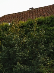 Evere chat sur le toit (2).jpg