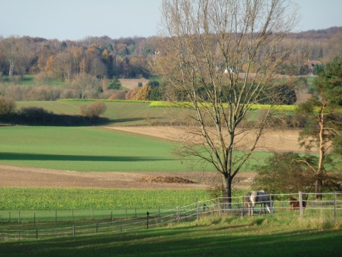 Promenade à Duisburg (novembre 2009) - les chevaux.JPG