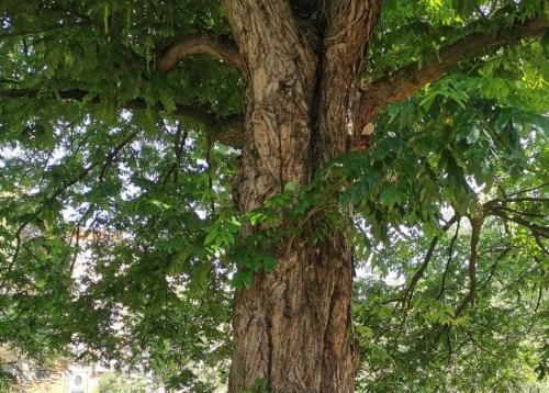 arbres,square riga,métro riga,préservation,patrimoine naturel,balade,culture,schaerbeek