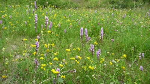 Fleurs d'été 2011 (1).jpg