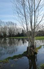 gevers,marie,vie et mort d'un étang,récit,littérature française de belgique,extrait,eau,arbres,reflets,nature,culture