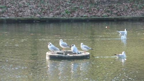 parc josaphat,schaerbeek,balade,février,nature