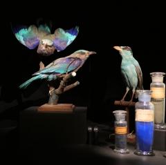 musée L oiseaux.jpg
