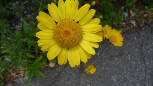 Fleurs d'été 2011 (3).jpg