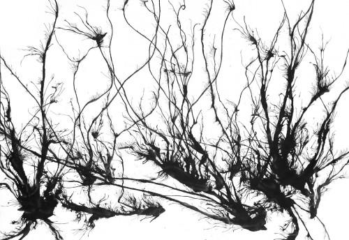 jenni,l'art français de la guerre,roman,littérature française,goncourt 2011,guerre,peinture,art,culture