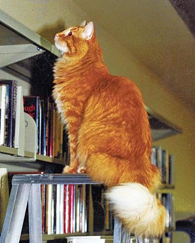 myron,dewey,chat de bibliothèque,récit,littérature anglaise,etats-unis,iowa,spencer,bibliothèque,culture