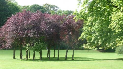parc de woluwe,woluwe-saint-pierre,bruxelles,espaces verts,étangs mellaerts,avenue de tervueren,promenade,culture