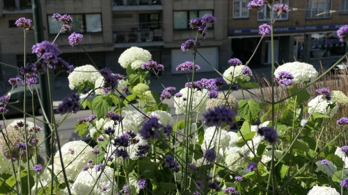 L'été dans la rue (3).JPG
