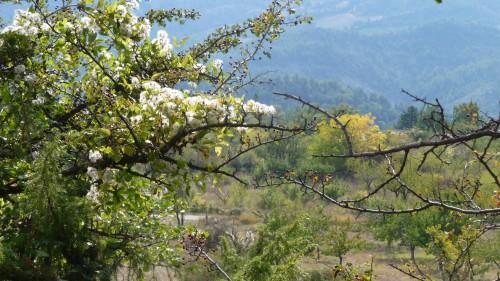automne,couleurs,paysages,photos,culture