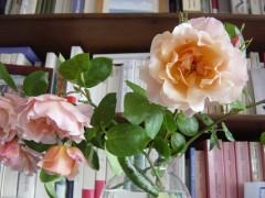 graves,lucia,une femme inconnue,anglaise,espagne,franco,majorque,catalogne,rose,livre,sant jordi,culture
