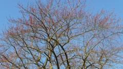Laeken printemps (11).JPG
