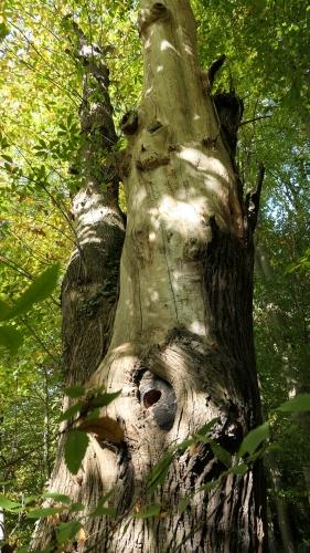 Tronc d'arbre.JPG