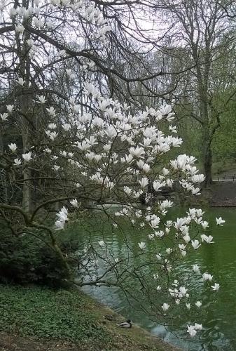 balade,parc josaphat,avril,printemps,jaune,fleurs,arbres,culture,espace vert,schaerbeek