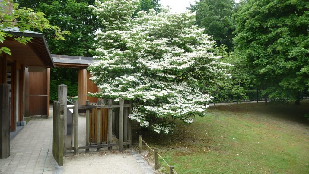 Au Jardin Japonais Textes Pretextes