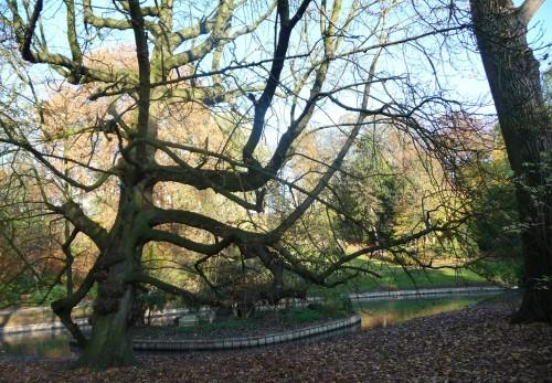 arbres,parc josaphat,branches,bruxelles,schaerbeek,promenade,automne,culture