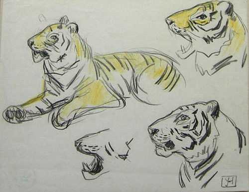 JEAN-HAFFEN Yvonne Etude de tigres XXe.jpg