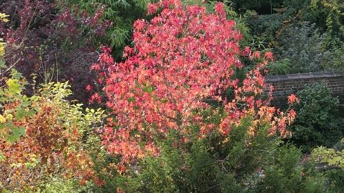 lumière,octobre,automne,balade,couleurs,nature,arbres,square riga,métro,enquête publique,protection,espaces verts,culture