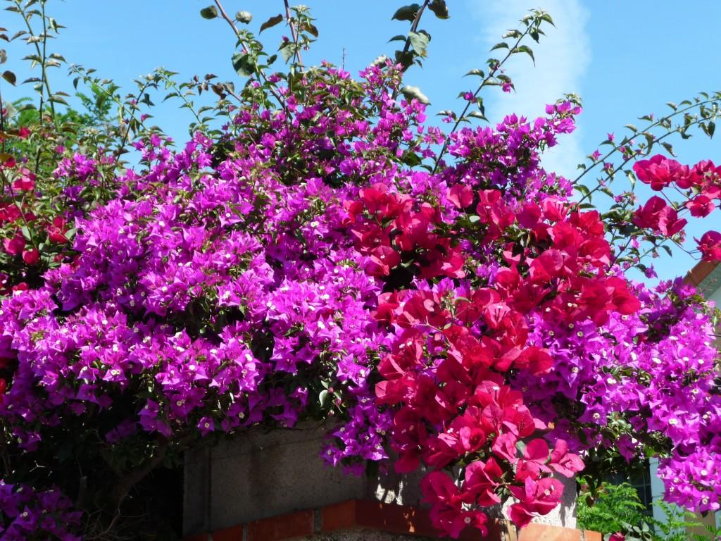 fleur du midi
