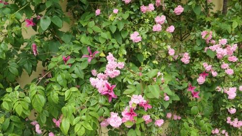 eté,jardin,roses,pivoines,fleurs,jardiniers