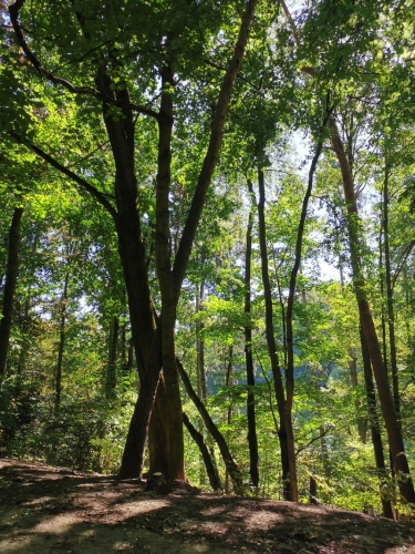 Parc de Woluwe (21).jpg