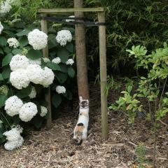 Jardin Demolder (35).JPG