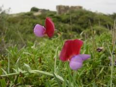Littoral 6 Gesse de Provence.JPG
