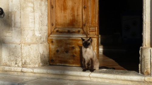 Chat d'église.JPG