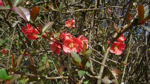 Basho fleurs rouges.jpg
