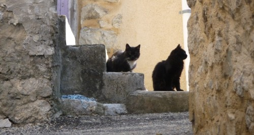 chats,rencontre,photos,regard,culture