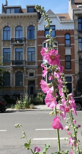 L'été dans la rue (12).JPG