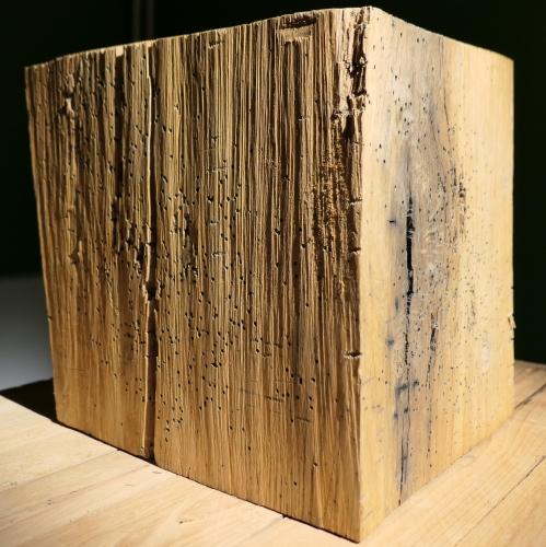 trees for memories,exposition,villa empain,centenaire de 1918,sculpture,art,culture,paix