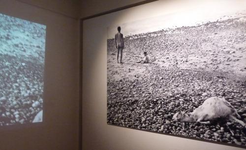agnès varda,patates et compagnie,exposition,musée d'ixelles,bruxelles,ab.ad.,jean-marie bytebier,peinture,art contemporain,culture
