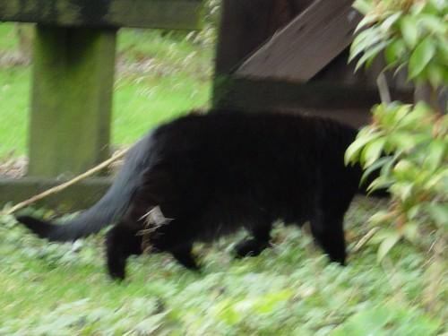Chat au jardin.JPG