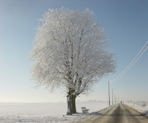 arbre blanc.jpg