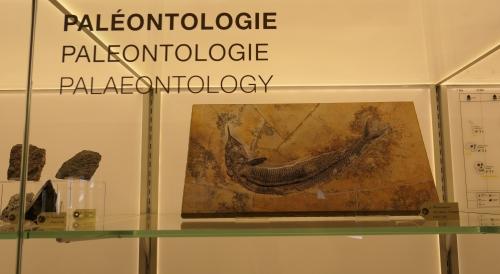 musée L paléontologie.jpg