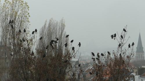 photos,insolite,chats,oiseaux
