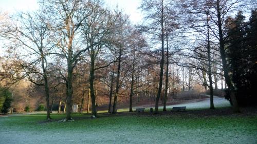 parc josaphat,schaerbeek,30 décembre 2016,lumière,hiver,nature,arbres