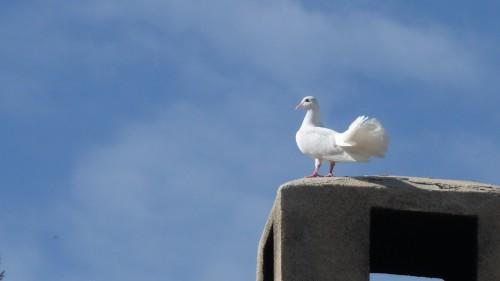 Vivier oiseau sur ciel bleu.jpg