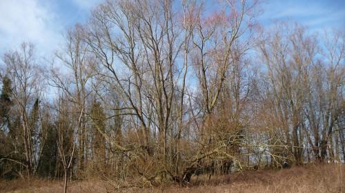 8 mars,femmes,bruxelles,moeraske,promenade,jardin partagé,lecercledéchetsdoeuvres,sphaerocarpos michelii,conure veuve,nature,culture