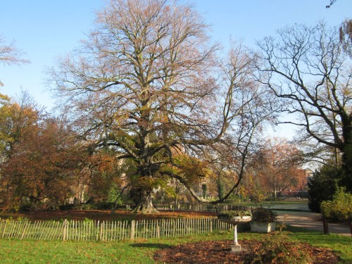 prévert,quand l'homme de lettres dit,arbres,poésie,littérature française,parc josaphat,automne,culture