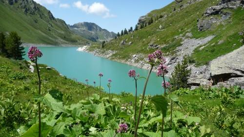bisses,eau,valais,nendaz,chemin,balade,alpes,montagne,nature,culture