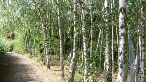 moeraske,schaerbeek,evere,réserve naturelle,balade,bruxelles,biodiversité,nature,culture