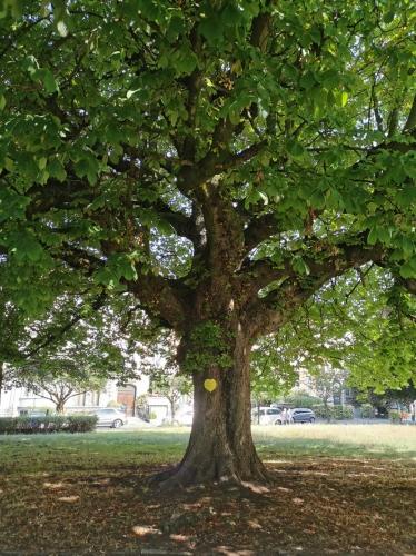 arbres,square riga,métro riga,préservation,patrimoine naturel,balade,nature,schaerbeek