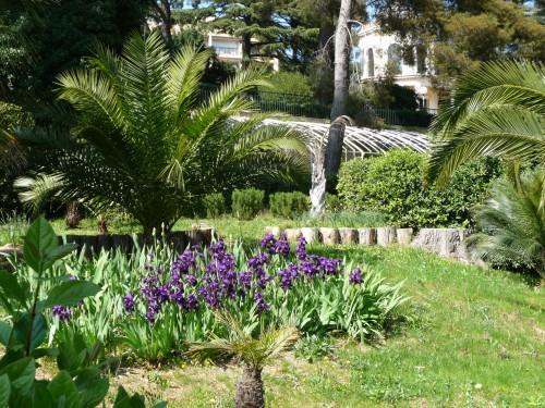 Tamaris Jardin du Château de Michel Pacha (serres et iris).JPG