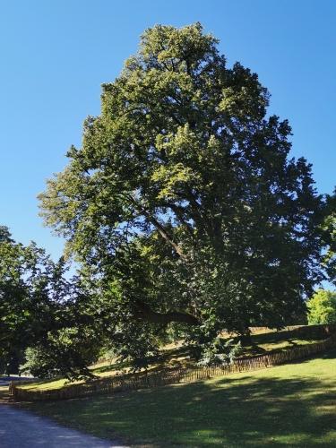 Parc de Woluwe (3).jpg
