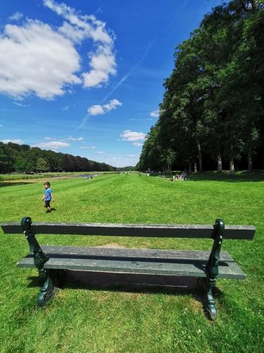 tervueren,tervuren,parc,canal,forêt,foulques,promenade,nature